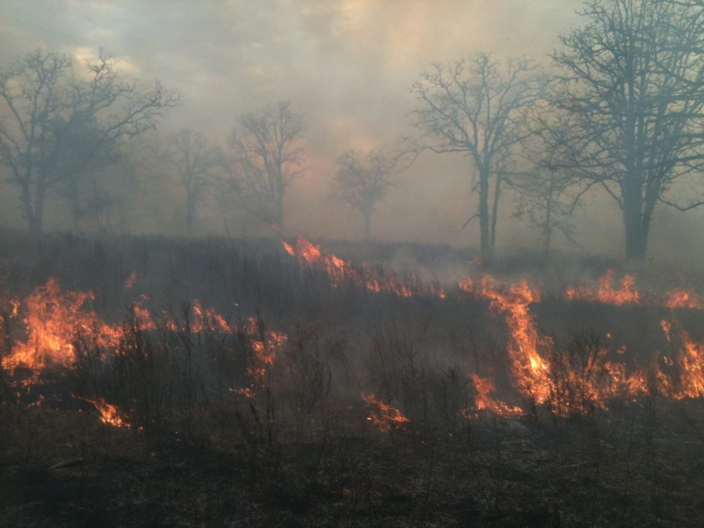 Head fire post oak savannah